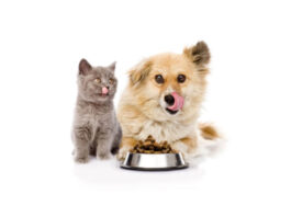 Recycled plastic for Pet Food Packaging